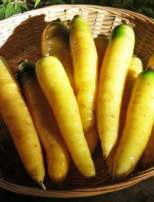 carotte-yellowstone