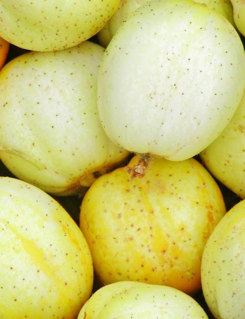concombre-citron