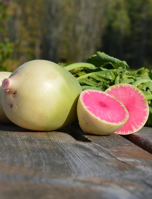 radis-melon-deau