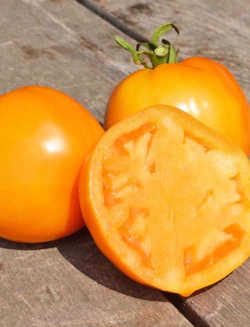 tomate-jubilee