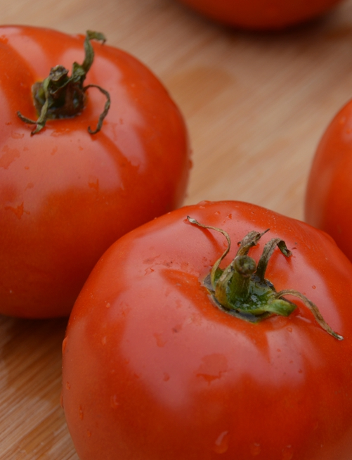 tomate-manitoba