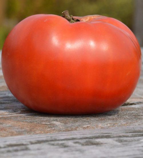 tomate-rose-de-berne